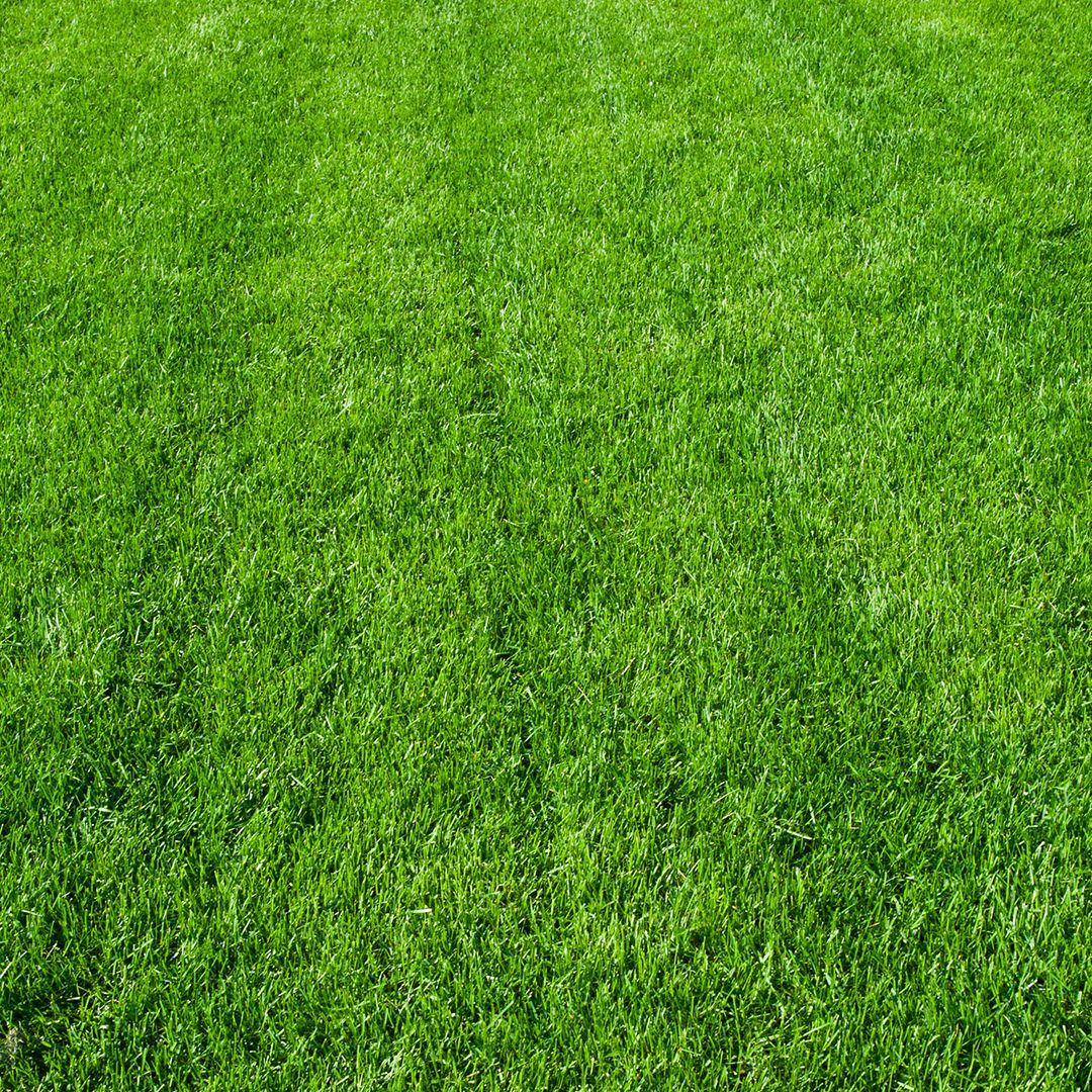 Three Ways Lime Helps Your Lawn Green Lawn Fertilizing