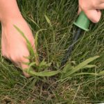 How Do I Get Rid of Crabgrass?