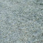 How Harmful Is Frost on Your Lawn?