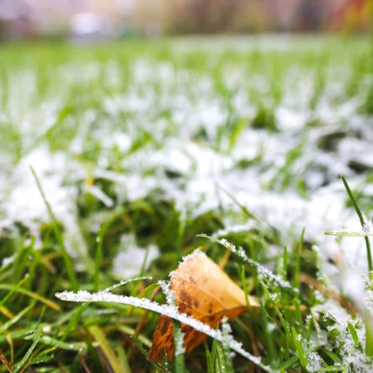 How to Protect Your Lawn from the Cold