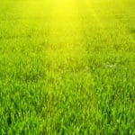 Five Tips for Getting Green Grass