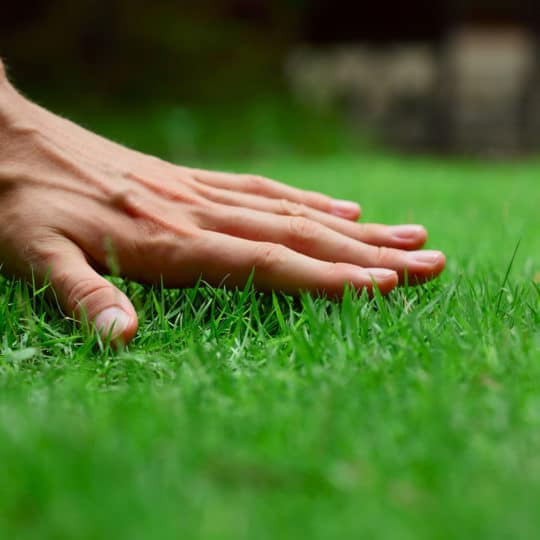 What to Look for in a Lawn Care Service