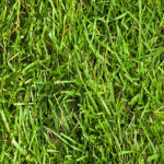 What is Crabgrass?