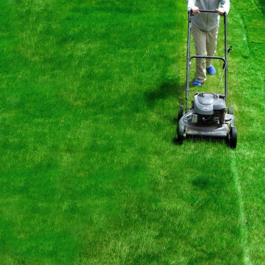 What Is The Best Spring Lawn Care Schedule?