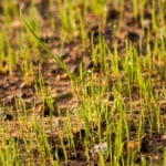 Top Five Grass Seed Tips