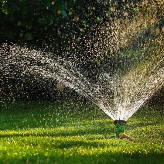 What Is the Best Time of Day to Water Grass?