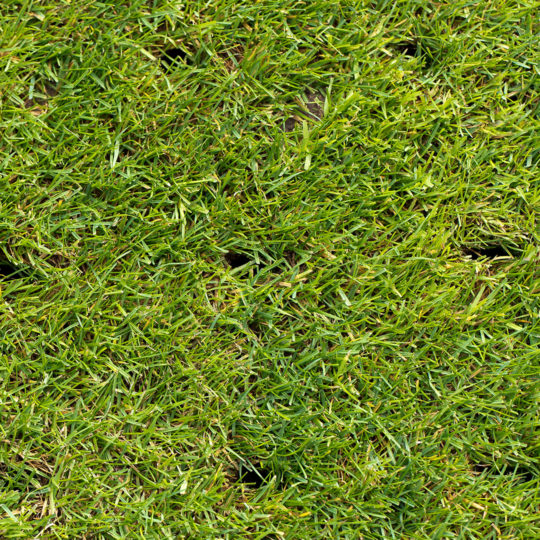Why, How, and When to Aerate Your Lawn
