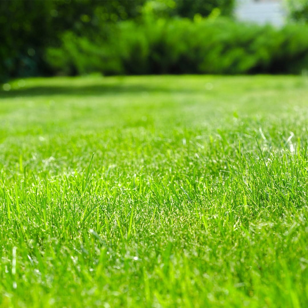 How Much Does Aeration And Seeding Cost Green Lawn Fertilizing