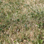Solutions for Sun-Scorched Grass