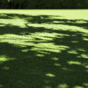 grass-shade