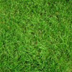 How to Care for New Grass