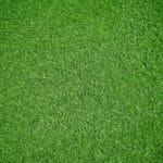 How to Make Your Lawn Thicker and Greener