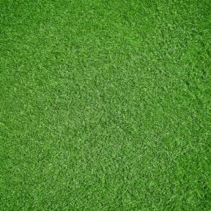 How To Make Your Lawn Thicker And Greener Green Lawn