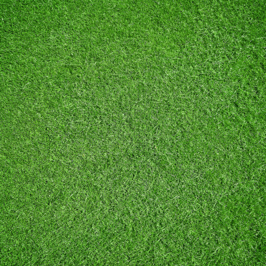 Why Is Grass Green?