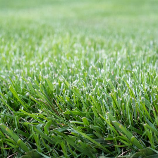 2019 Lawn Fertilizing Schedule