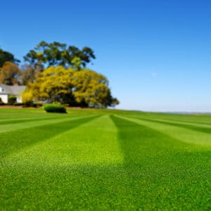 How To Choose A Lawn Care Company Green Lawn Fertilizing