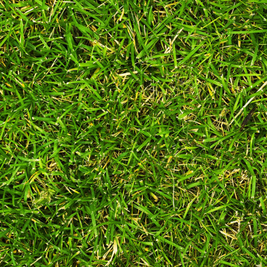How Does Crabgrass Control Work?