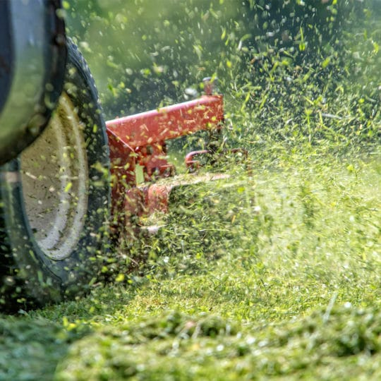 Spring Lawn Care Tasks You Can Do Right Now