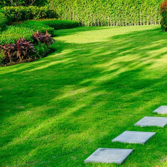 Which Lawn Care Company Is Right for You?