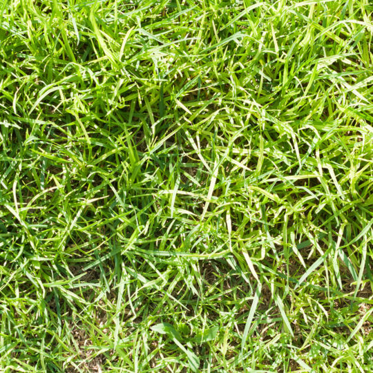 How to Identify Crabgrass