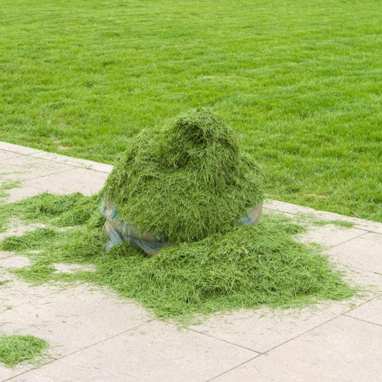 What to Do about Grass Clippings