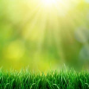 Green grass-Sunshine