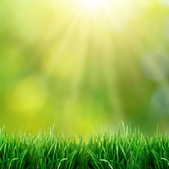 Is Grass Good for the Environment?
