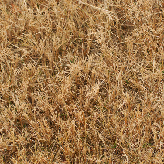 Four Reasons Why Lawns Turn Brown