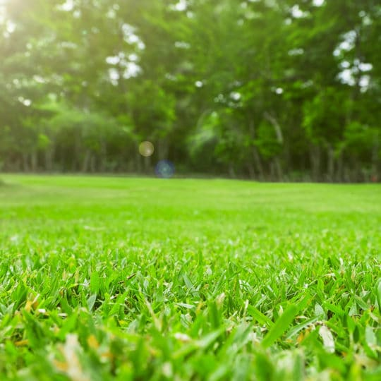 How to Prevent Lawn Disease before It Happens