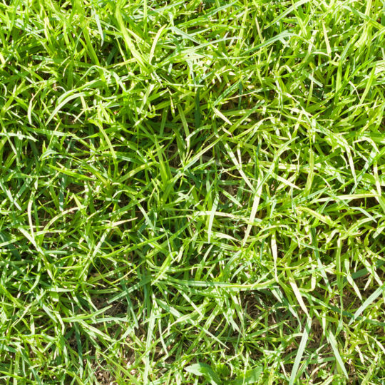 When Does Crabgrass Germinate?