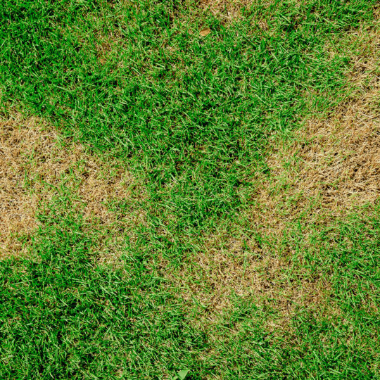 How to Treat Brown Patches on Your Lawn