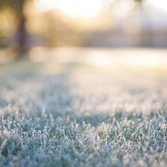 How to Protect Your Lawn from Cold