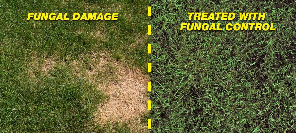 Fungal Damage Comparison