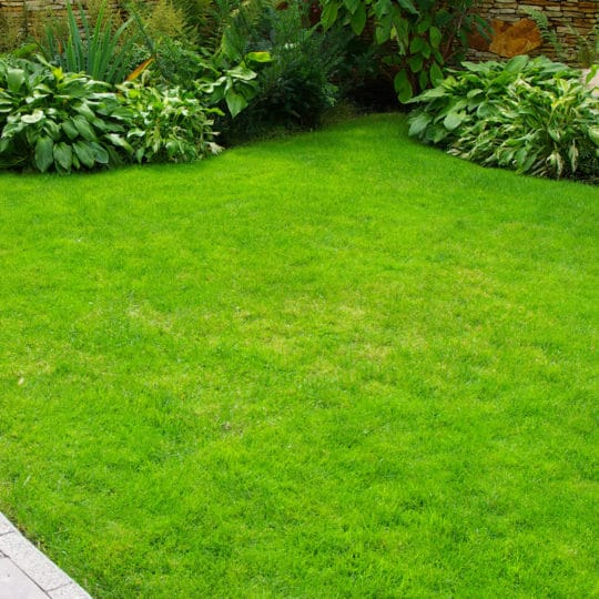 Trugreen vs Natural Lawn of America