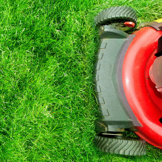How to Mow Your Grass for Winter