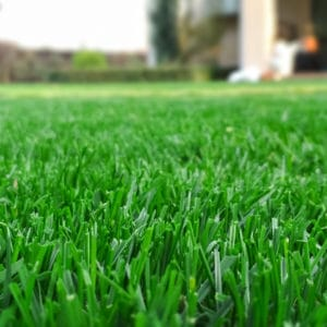 All About Lime for Your Lawn