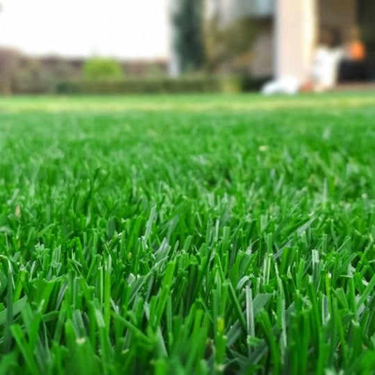 Benefits of Lawn Care for Seniors