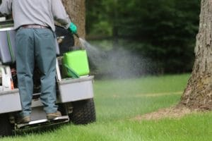 Apply Organic or Synthetic Weed Control to Your Lawn?