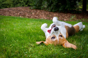 Is lawn flea and tick spray safe for dogs?