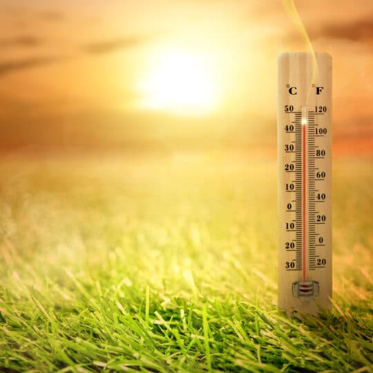 Heat-Stressed Lawn: Signs & Solutions