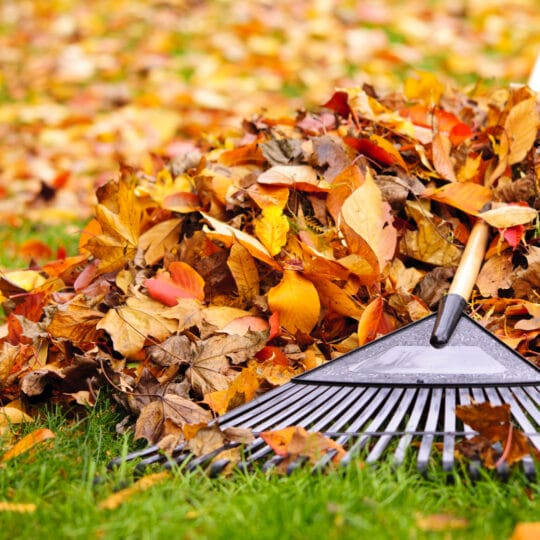 Rake or Mulch Leaves: Which Is Better?